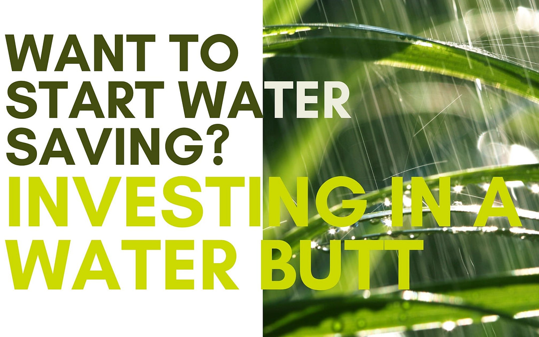 Gardening Basics: Investing in a Water Butt